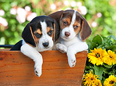 PUP 09 RK0204 01