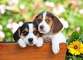 PUP 09 RK0205 01
