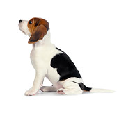 PUP 09 RK0210 01