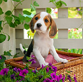PUP 09 RK0211 01