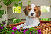 PUP 09 RK0212 01