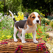 PUP 09 RK0213 01
