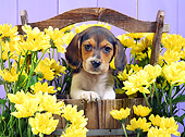PUP 09 XA0001 01