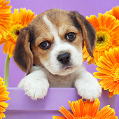 PUP 09 XA0003 01