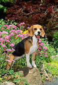 PUP 09 CE0005 01