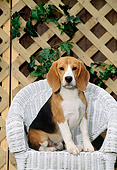 PUP 09 CE0008 01