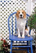 PUP 09 CE0009 01