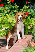 PUP 09 CE0010 01