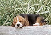 PUP 09 CE0011 01