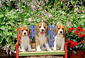 PUP 09 CE0013 01