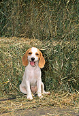 PUP 09 CE0015 01
