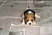 PUP 09 DC0002 01