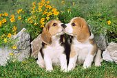 PUP 09 FA0001 01