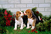 PUP 09 FA0004 01