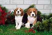 PUP 09 FA0005 01