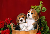 PUP 09 FA0007 01