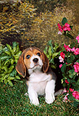 PUP 09 FA0015 01