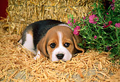PUP 09 FA0016 01