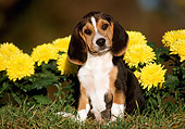 PUP 09 GR0007 01