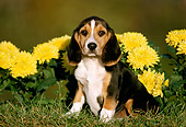 PUP 09 GR0007 02