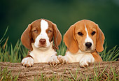 PUP 09 GR0016 01