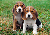 PUP 09 GR0019 01