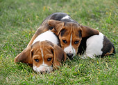 PUP 09 GR0020 01