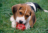 PUP 09 GR0033 01