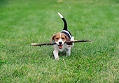 PUP 09 GR0036 01