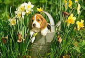 PUP 09 LS0003 01