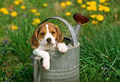 PUP 09 LS0004 01
