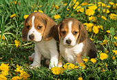 PUP 09 LS0005 01
