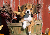 PUP 09 LS0007 01