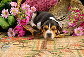 PUP 09 RC0002 01