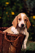 PUP 09 RK0019 11
