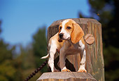 PUP 09 RK0032 02