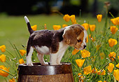 PUP 09 RK0045 04