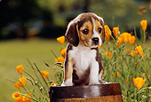 PUP 09 RK0046 10
