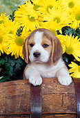 PUP 09 RK0052 01