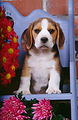 PUP 09 RK0071 03
