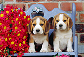 PUP 09 RK0075 01