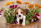 PUP 09 RK0078 01