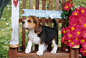 PUP 09 RK0085 03