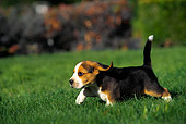 PUP 09 RK0088 05