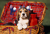 PUP 09 RK0091 01