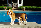 PUP 09 RK0093 03