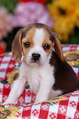 PUP 09 RK0095 07