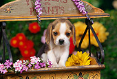 PUP 09 RK0106 02