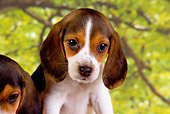 PUP 09 RK0175 01