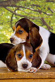 PUP 09 RK0178 01